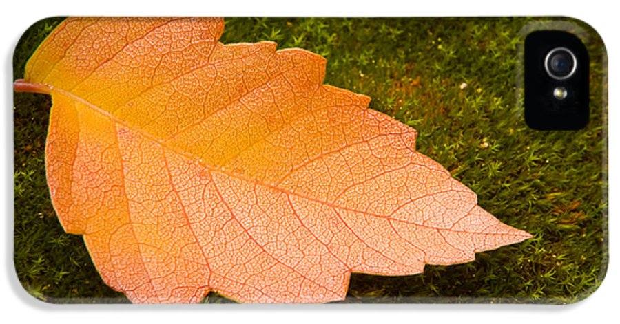 3scape Photos IPhone 5 Case featuring the photograph Leaf On Moss by Adam Romanowicz