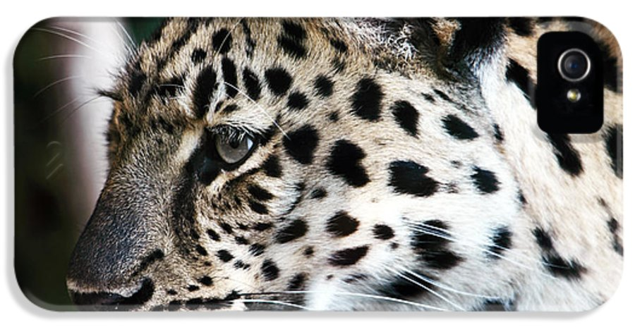 Wildlife IPhone 5 Case featuring the photograph Leopard by John Rizzuto