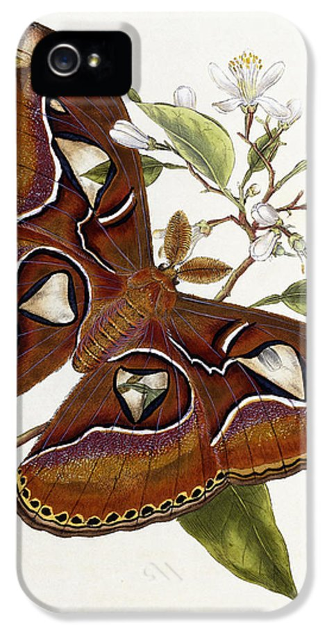 Butterfly IPhone 5 Case featuring the painting Lepidoptera by Edward Donovan