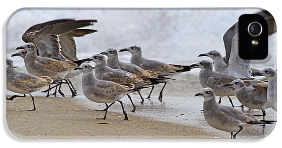 Seagull IPhone 5 Case featuring the photograph Let's Blow This Joint by Betsy Knapp