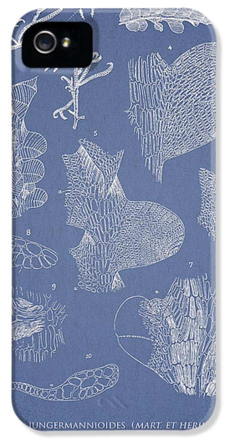 Algae IPhone 5 Case featuring the drawing Leveillea Jungermannioides by Aged Pixel