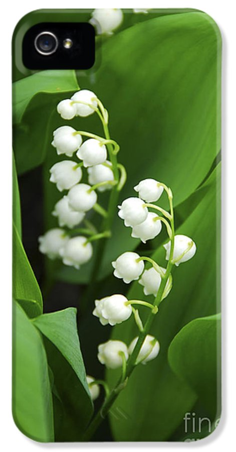 Lily IPhone 5 Case featuring the photograph Lily-of-the-valley by Elena Elisseeva