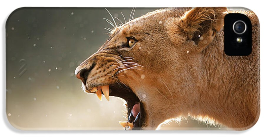 Lion IPhone 5 Case featuring the photograph Lioness Displaying Dangerous Teeth In A Rainstorm by Johan Swanepoel