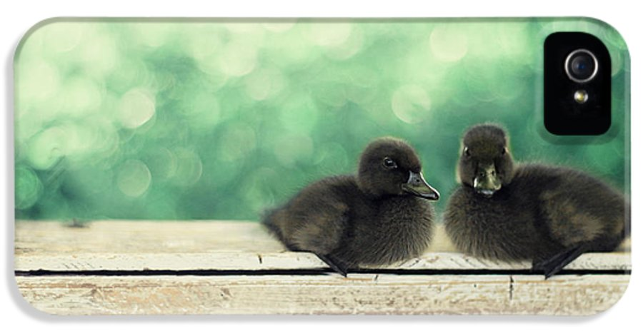 Duck Photography IPhone 5 Case featuring the photograph Little Buddies by Amy Tyler