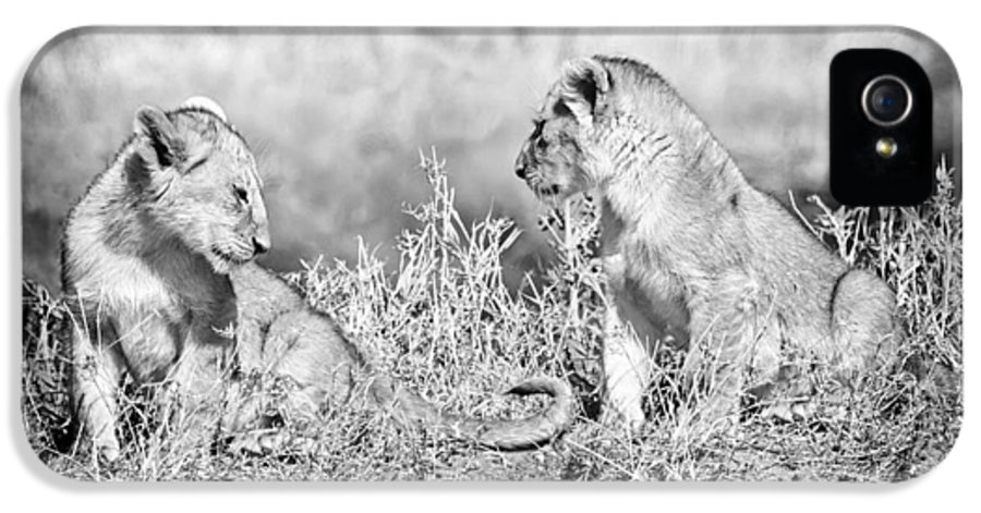 3scape IPhone 5 Case featuring the photograph Little Lion Cub Brothers by Adam Romanowicz