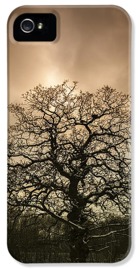 Tree IPhone 5 Case featuring the photograph Lone Tree by Amanda Elwell