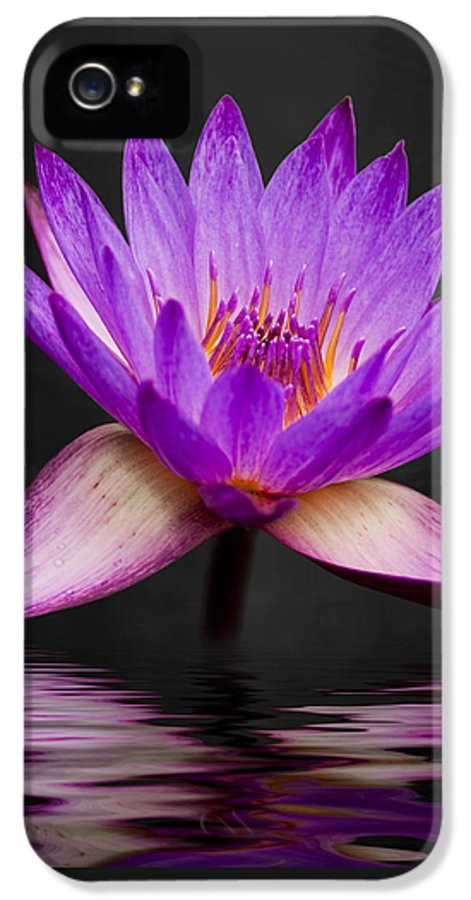 3scape Photos IPhone 5 Case featuring the photograph Lotus by Adam Romanowicz