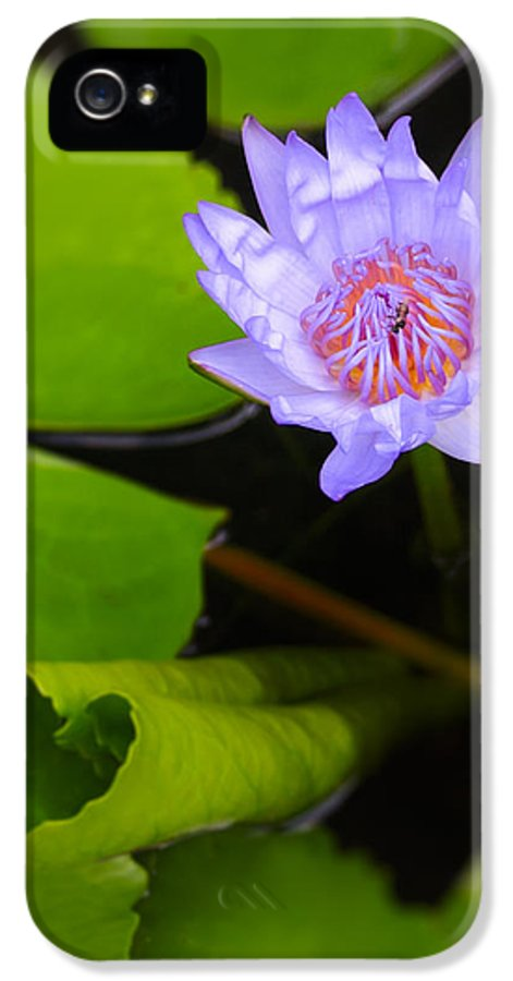 3scape Photos IPhone 5 Case featuring the photograph Lotus Flower And Lily Pad by Adam Romanowicz