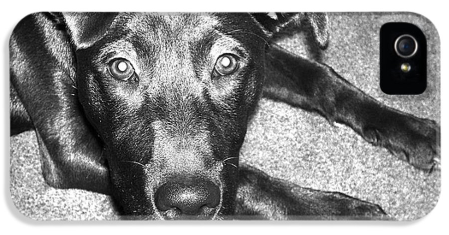 Dog IPhone 5 Case featuring the photograph Loyal Friend by Shawna Rowe