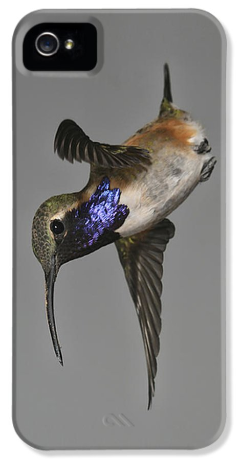 Bird IPhone 5 Case featuring the photograph Lucifer Hummingbird - Phone Case Design by Gregory Scott