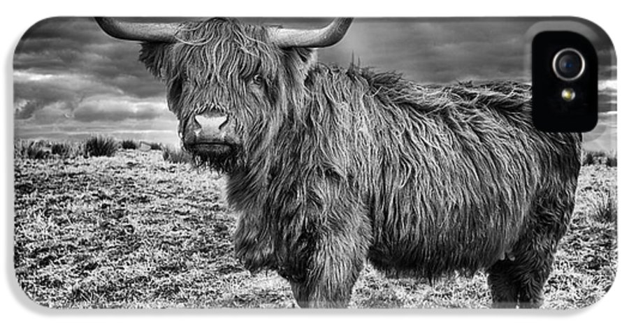 Sheep IPhone 5 Case featuring the photograph Magestic Highland Cow by John Farnan