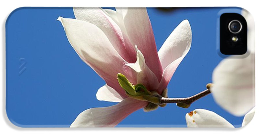 Magnolia IPhone 5 Case featuring the photograph Magnolia Flower by Allan Morrison