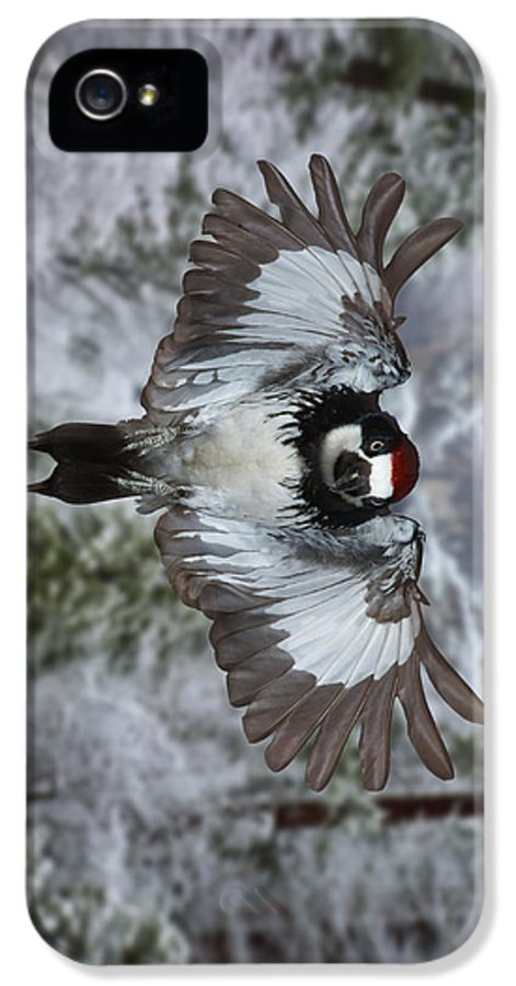Arizona IPhone 5 Case featuring the photograph Male Acorn Woodpecker - Phone Case Design by Gregory Scott