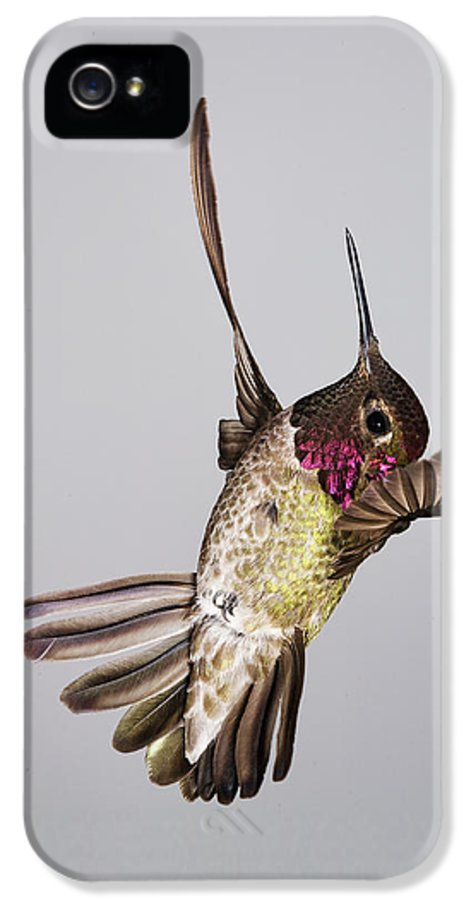 Annas IPhone 5 Case featuring the photograph Male Annas Hummingbird by Gregory Scott