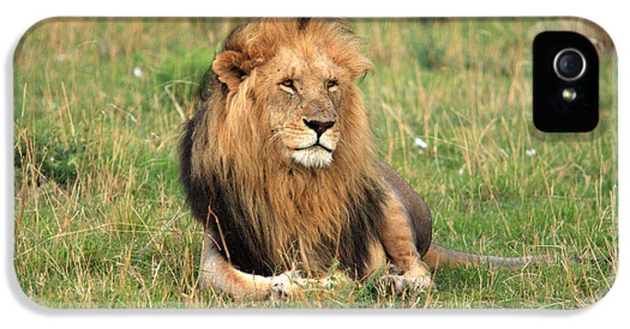 Lion IPhone 5 Case featuring the photograph Male Lion On The Masai Mara by Aidan Moran