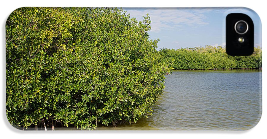 Florida IPhone 5 / 5s Case featuring the digital art Mangrove Forest by Carol Ailles