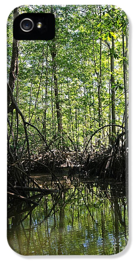 Nature IPhone 5 Case featuring the photograph mangrove forest in Costa Rica 2 by Rudi Prott