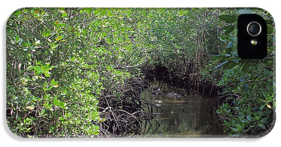 Mangroves IPhone 5 Case featuring the photograph Mangrove Forest by Tony Murtagh