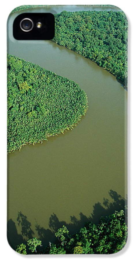 Jh IPhone 5 Case featuring the photograph Mangrove Rhizophora Sp In Mahakam Delta by Cyril Ruoso