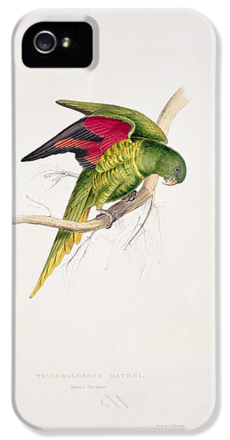 Maton IPhone 5 Case featuring the painting Matons Parakeet by Edward Lear