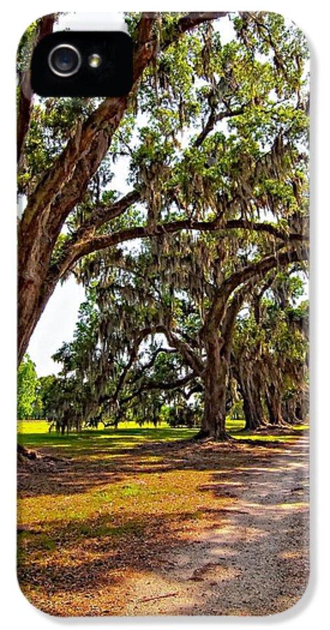 Evergreen Plantation IPhone 5 Case featuring the photograph Memory Lane by Steve Harrington