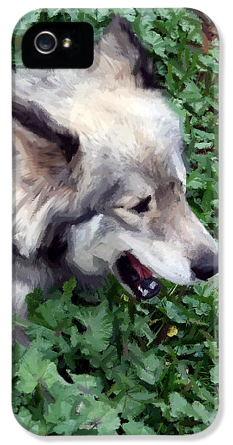 Dog IPhone 5 Case featuring the photograph Miley The Husky With Blue And Brown Eyes - Impressionist Artistic Work by Doc Braham