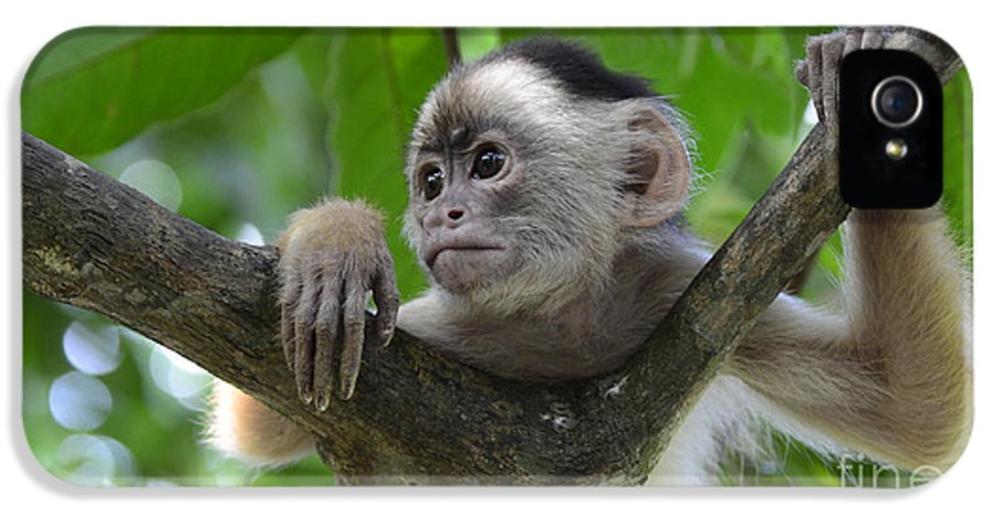 Amazon IPhone 5 Case featuring the photograph Monkey Business by Bob Christopher