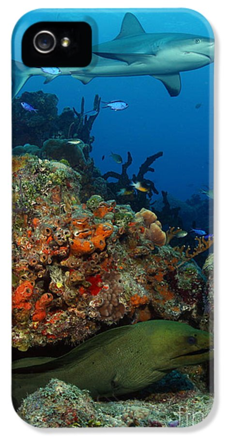 Shark IPhone 5 Case featuring the photograph Moray Reef by Carey Chen