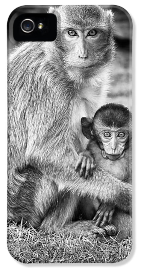 3scape Photos IPhone 5 Case featuring the photograph Mother And Baby Monkey Black And White by Adam Romanowicz