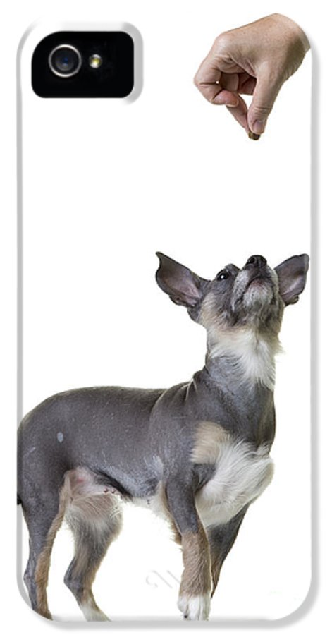Dog IPhone 5 Case featuring the photograph Motivation by Edward Fielding