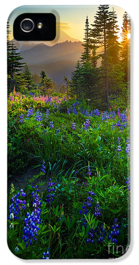 America IPhone 5 Case featuring the photograph Mount Rainier Sunburst by Inge Johnsson