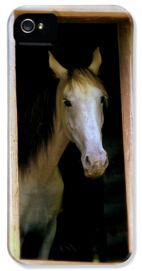 White Horse IPhone 5 Case featuring the photograph Mrs. Ed by Karen Wiles