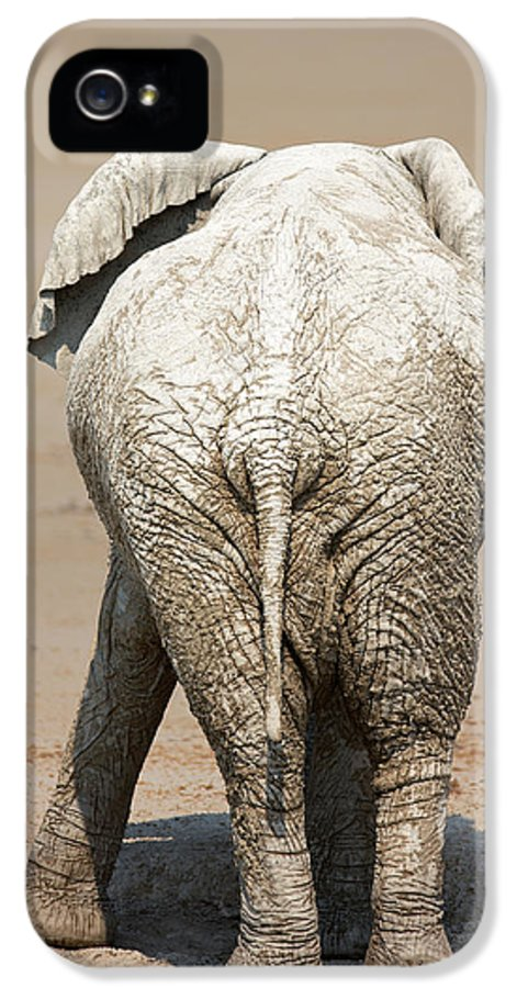 Elephant IPhone 5 Case featuring the photograph Muddy Elephant With Funny Stance by Johan Swanepoel