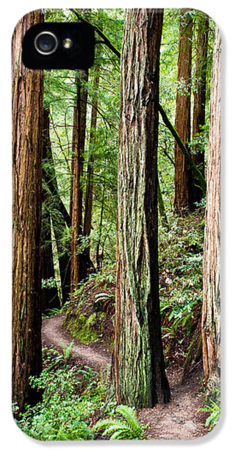 Tree IPhone 5 Case featuring the photograph Muir Woods by Niels Nielsen