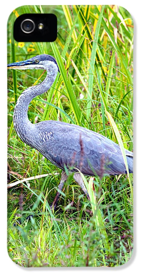 Bird IPhone 5 Case featuring the photograph My Blue Heron by Greg Fortier
