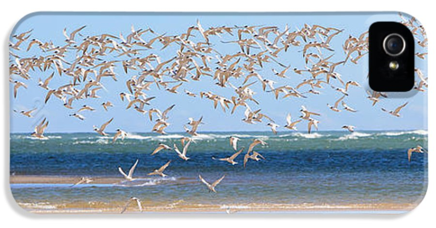 Tern IPhone 5 Case featuring the photograph My Tern by Bill Wakeley