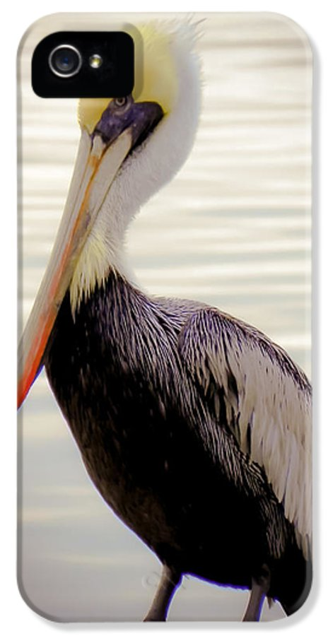 Bird IPhone 5 Case featuring the photograph My Visitor by Karen Wiles