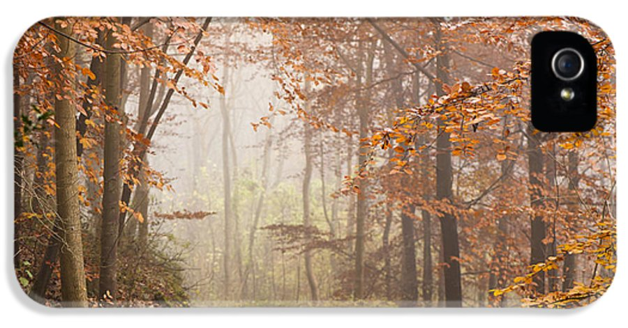 Atmospheric IPhone 5 Case featuring the photograph Mystic Woods by Anne Gilbert