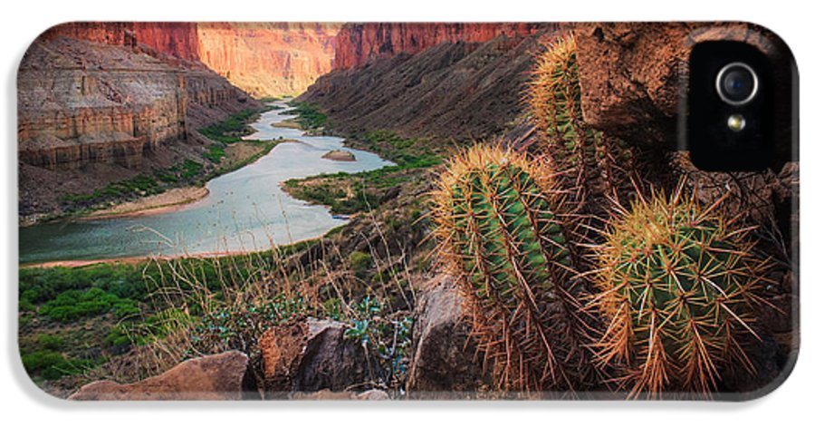 America IPhone 5 Case featuring the photograph Nankoweap Cactus by Inge Johnsson