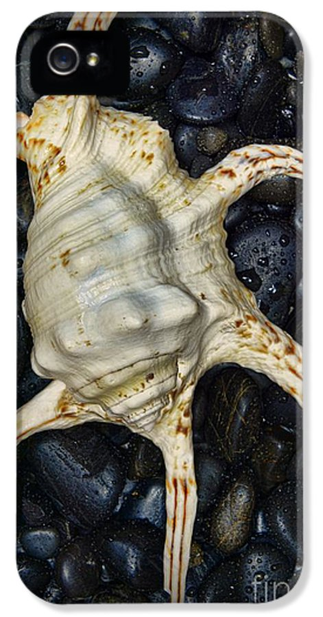 Paul Ward IPhone 5 Case featuring the photograph Nautical Tropical Seashell by Paul Ward
