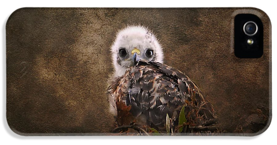 Baby Bird IPhone 5 Case featuring the photograph Nestling by Jai Johnson