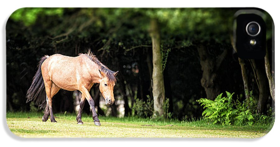 Forest IPhone 5 Case featuring the photograph New Forest Pony by Jane Rix