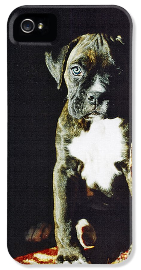Boxer Dog IPhone 5 Case featuring the digital art New To The World by Judy Wood