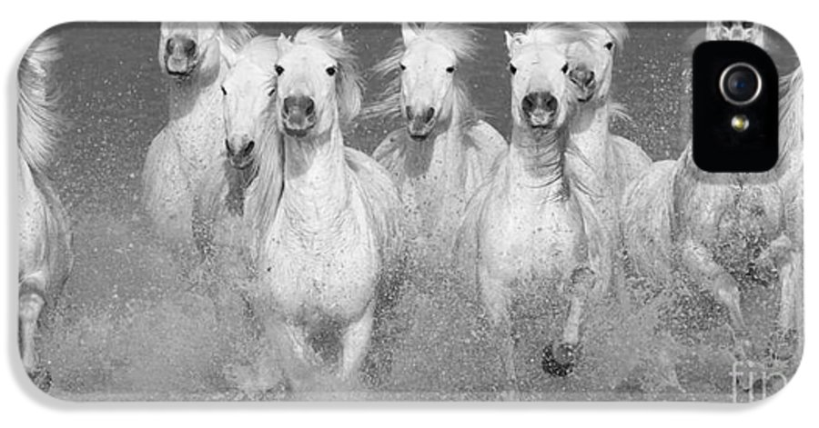 Horse IPhone 5 Case featuring the photograph Nine White Horses Run by Carol Walker