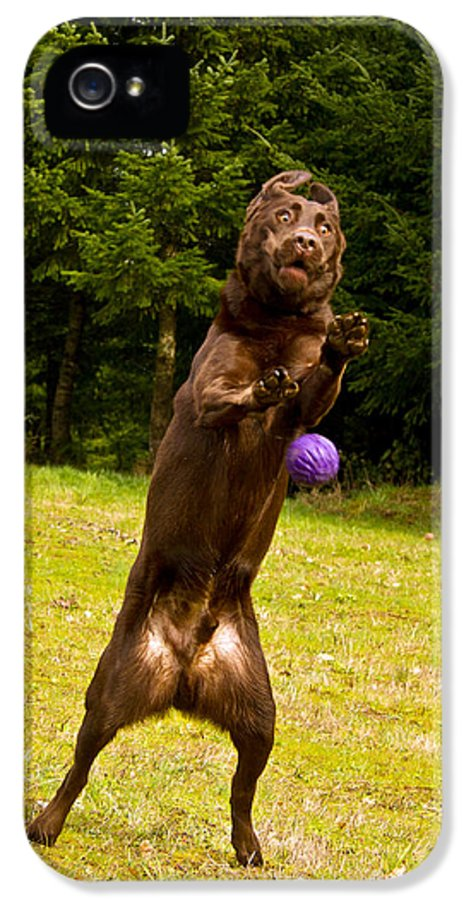 Animals IPhone 5 Case featuring the photograph Nute And The Ball by Jean Noren