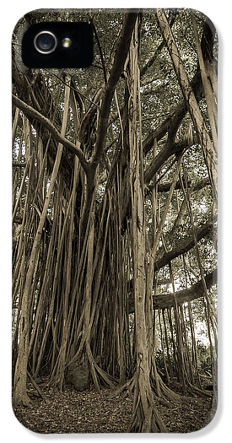 3scape Photos IPhone 5 Case featuring the photograph Old Banyan Tree by Adam Romanowicz