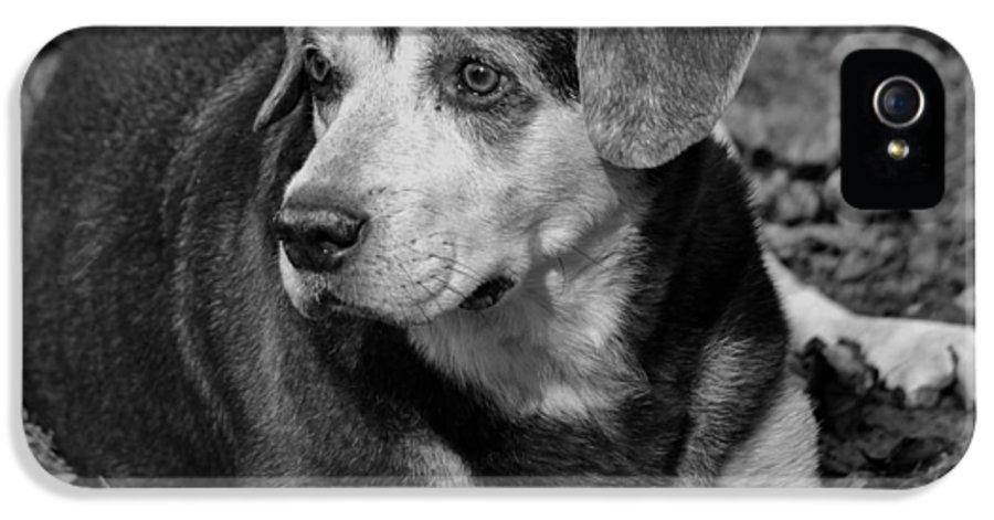 Labrador IPhone 5 Case featuring the photograph Older Gentleman by Krystal Goldie