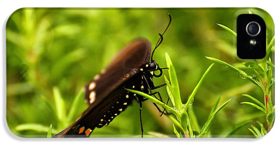 Butterfly IPhone 5 Case featuring the photograph On A Rainy Day by Lois Bryan