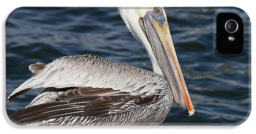Pelican IPhone 5 Case featuring the photograph On The Edge - Brown Pelican by Kim Hojnacki