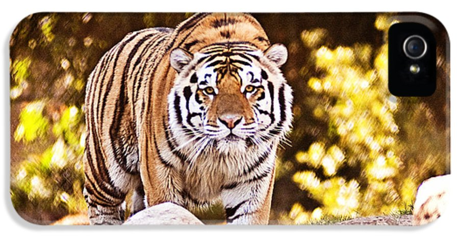 Tiger IPhone 5 Case featuring the photograph On The Prowl by Scott Pellegrin